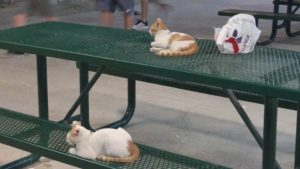Aw, kitties...The probably have rabies.